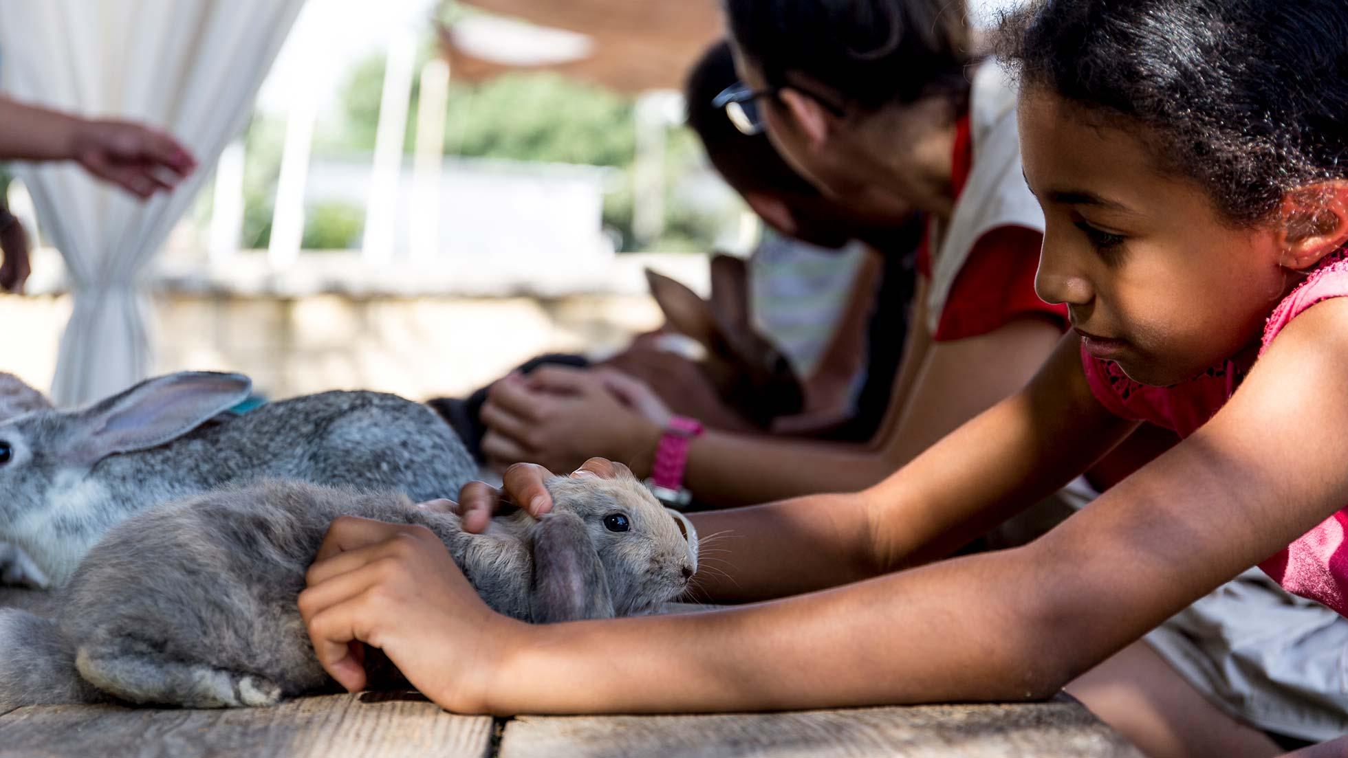 Campamento de verano 2019 - Niña con conejo